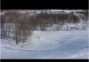 immagine cane che scia sulla neve