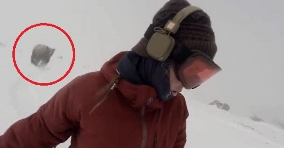 La snowboarder mentre viene inseguita dall'orso