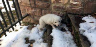 In foto il cucciolo abbandonato a Ussita