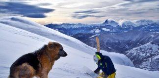 La foto del giorno di Lorenzo Alesi con Argo (pastore tedesco alsaziano Argo) fotografati da Tania Montani - Montagna dei Fiori