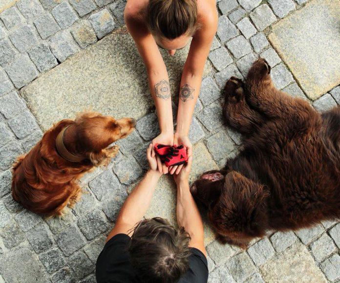 marcel hirscher laura moisl cani scarpine