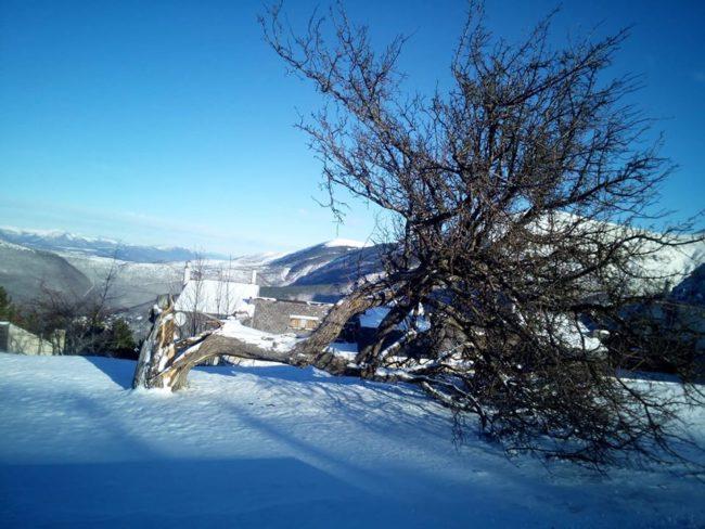 Frontignano, vento abbatte l'albero che ha dato il nome alla stazione di partenza della seggiovia