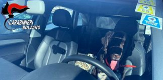 Cane in auto per un pomeriggio mentre loro sono sulle piste da sci