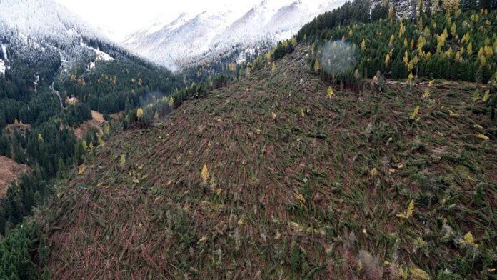 Alto Adige, sistemato 80% dei boschi colpiti dalla tempesta Vaia