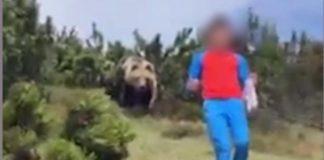 Trentino, orso sbuca da un cespuglio dietro ad un bambino che si salva grazie alla sua calma